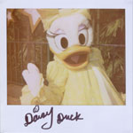Portroids: Portroid of Hollywood Daisy Duck